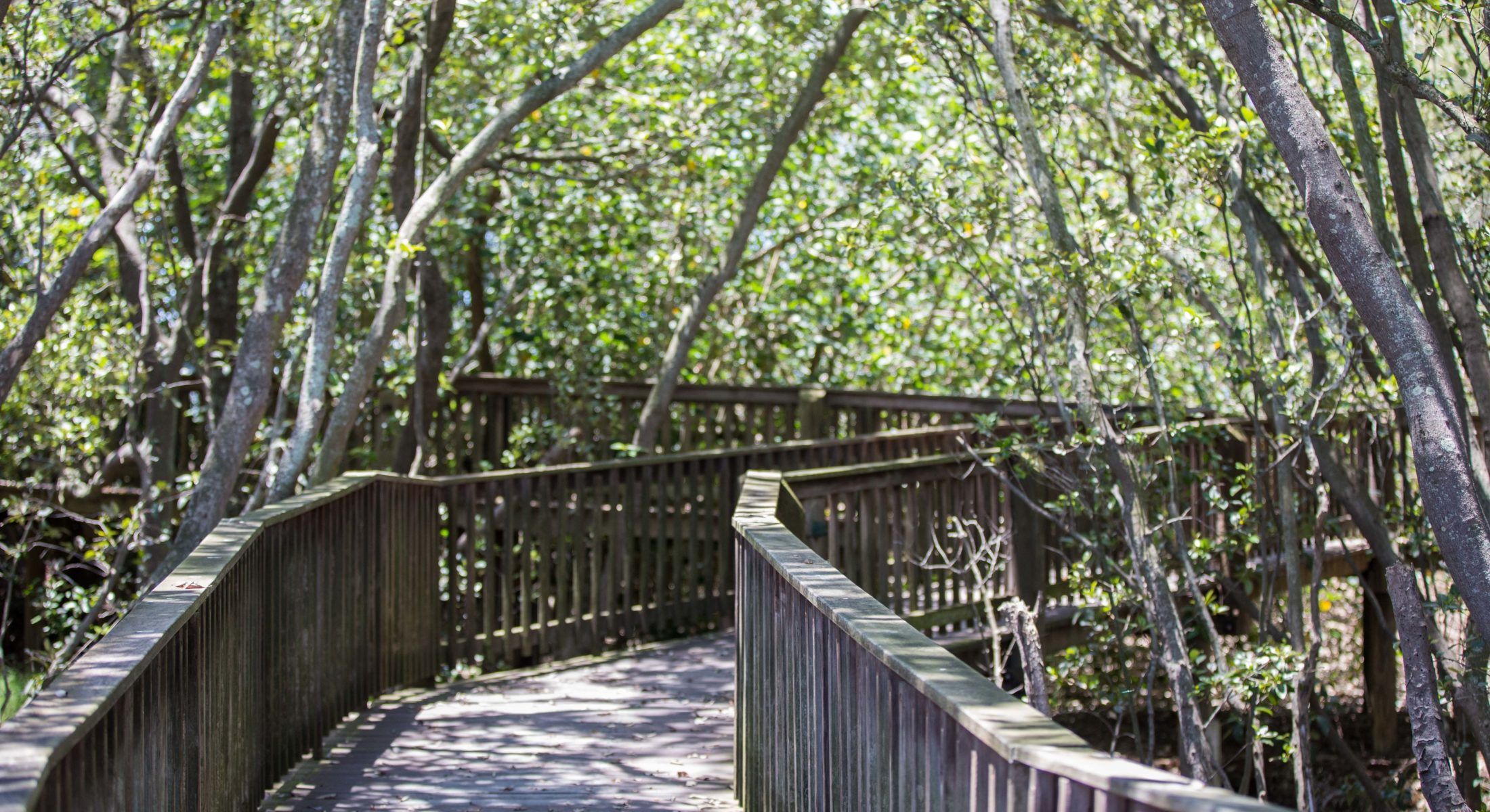 Osprey House has accessible boardwalks for nature exploration